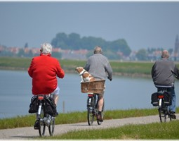 Physical Activity Routines After Stroke (PARAS)